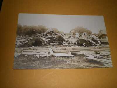 1911 RPPC Pesotum Illinois Champaign County Postcard 6 Tornado Wreck Dead Cows
