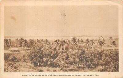 SUGAR CANE PRESS ORANGE & COCOANUT GROVE CAXAMBAS FLORIDA DPO POSTCARD (c. 1915)