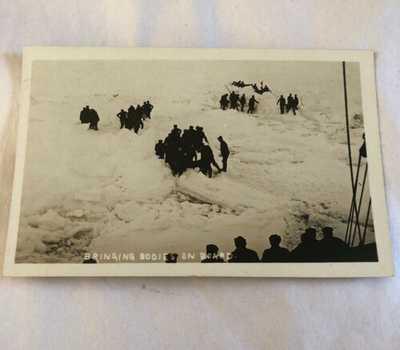 Original R.P.P.C. S.S. Florizel Shipwreck Bodies Found Newfoundland Postcard