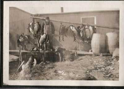 VINTAGE PHOTOGRAPH DUCKS/GEESE BIRD HUNTING DOG WESTBROOK CONNECTICUT OLD PHOTO
