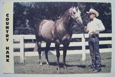 Country Hank Grey Stallion Show Horse Vintage Postcard; AQHA Champion; S. Dakota