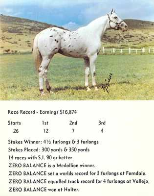 postcard BIG 5.5x7 APPALOOSA Race Horse ZERO BALANCE son of WALLET LIFTER