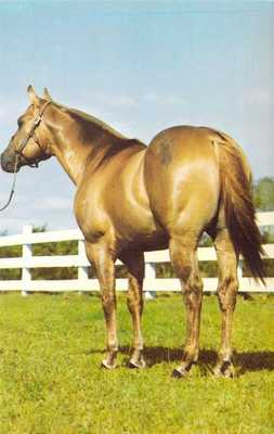 FL Sarasota OLE BITS MAN Quarter Horse Stallion - Myakka Valley Stable postcard