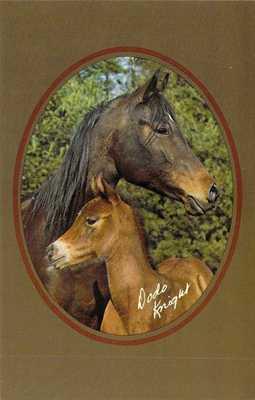 ME Greene Purebred ARABIAN MARE Home Farm Rani & FOAL Pagreda Sayyide postcard