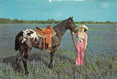 TX Devine - APPALOOSA Stallion CHIEF OF FOURMILE III - Dexter Press 4x6 postcard