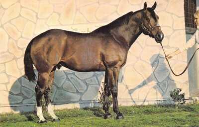 REGISTERED QUARTER HORSE Bob Lee Blair Dri-Creek Ranch Plant City FLpostcard