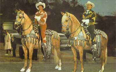 IN Coesse PALOMINO HORSES Parade Dress Tack CAMPBELL RANCH Dexter Press postcard
