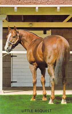 LITTLE REQUEST Quarter Horse Stallion Advertising Escondido CA 1959-64 postcard